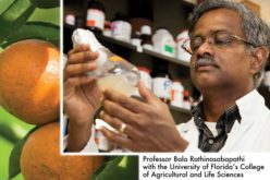 Research that goes beyond the lab for citrus, avocados, and bell peppers