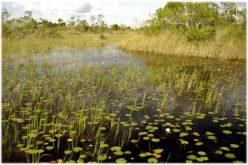 Commissioner's AgriCorner: State preserves record 2,500 acres of environmentally sensitive ag land