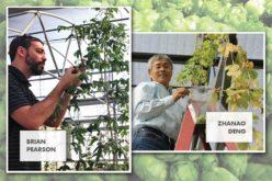 Scribbling away at Florida's next big crop potential