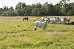 Q&A on the Forage Field Day