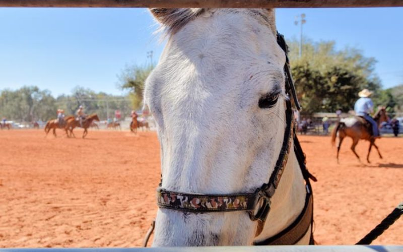 Looking for a recreation horse? Consider these five breeds found on the ranch