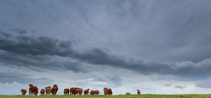 Hurricane preparedness for crops and livestock large and small