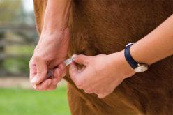 EEE update: Preventing Eastern Equine Encephalitis for your horse
