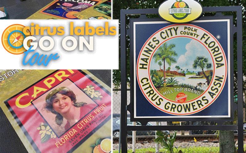 Citrus labels go on tour: Historic brands make a comeback in the region