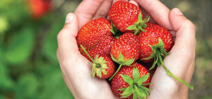 Recipe Spotlight: What to do with all those strawberries from your U-pick adventures
