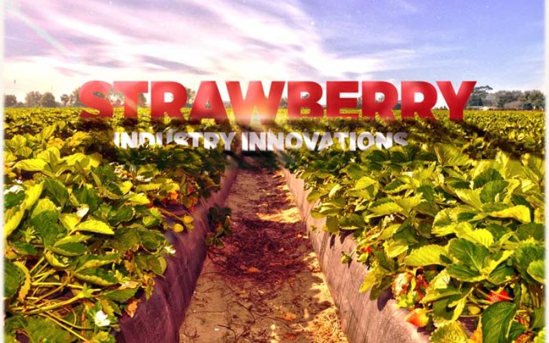 Strawberry-harvesting robots, more of the sweeter varieties, and new U-picks