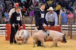 Ag Time with Abby: Celebrating the many 'firsts' from the Polk County Youth Fair