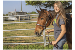 Three things every novice horseback rider should know before starting lessons
