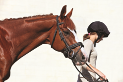 Equine Summer Camp Safety Tips for Young Riders
