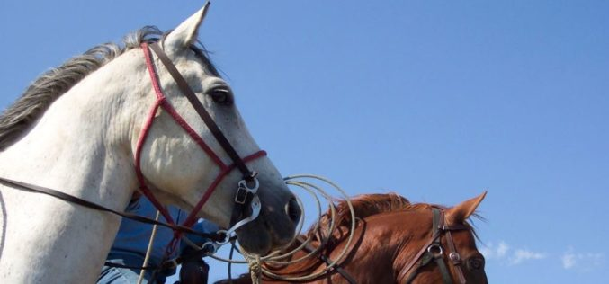 Keeping the Ranch Rodeo Tradition Alive with Florida Cattlemen