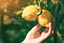 Citrus Growing Project Helps Students Understand Agriculture