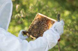 Honey Bee Lab Central Florida