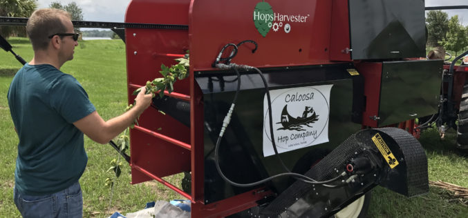 Harvesting Machine Eases Labor Demands for Growers of this New, Alternative Crop