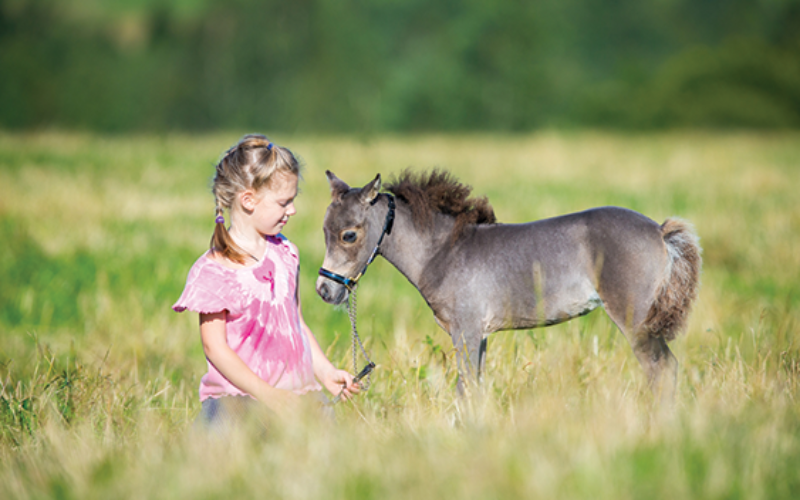 Five Fun Facts about the Miniature Horse