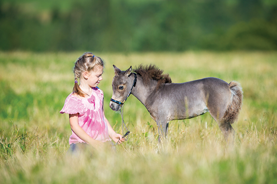 Five Fun Facts About The Miniature Horse Central Florida Ag