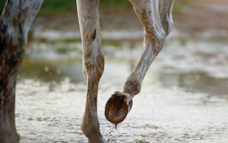 Horses vs Rain