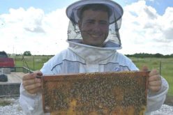 Eichar Apiary: Saving the Bees One Hive at a Time