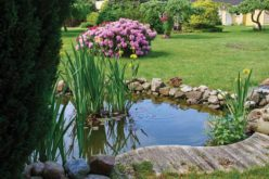 Helpful Tips for a Beautiful Backyard Pond