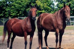Equine Rescue Groups Gather to Network and Learn