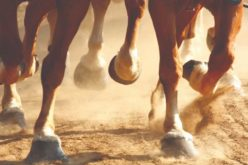 Upcoming 2019 UF/IFAS Horse Workshop
