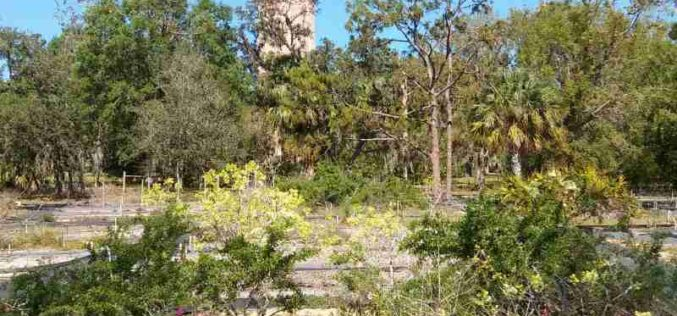 Preserving Florida's Beauty: A Look At Bok Tower Gardens' Rare Plant Conservation Program