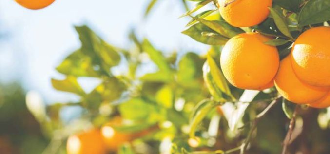 Meet the 2019 Citrus Hall of Fame Inductees