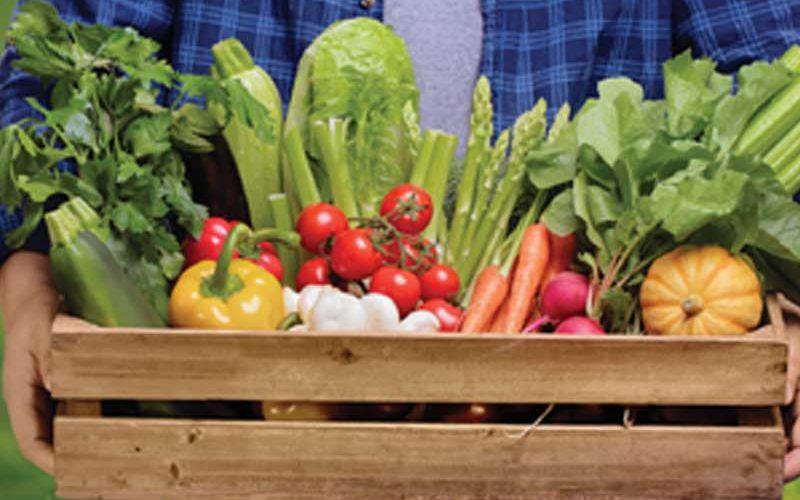 Sarasota County Schools Celebrate Florida Food