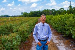 David Weber is No Stranger to Blueberries