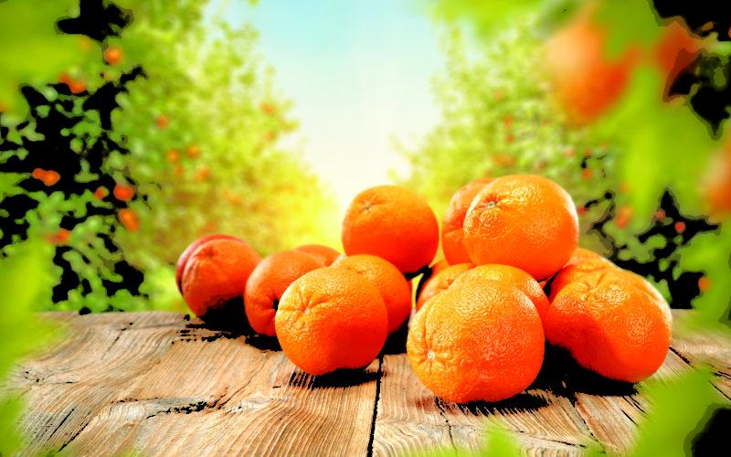 Citrus Roundup