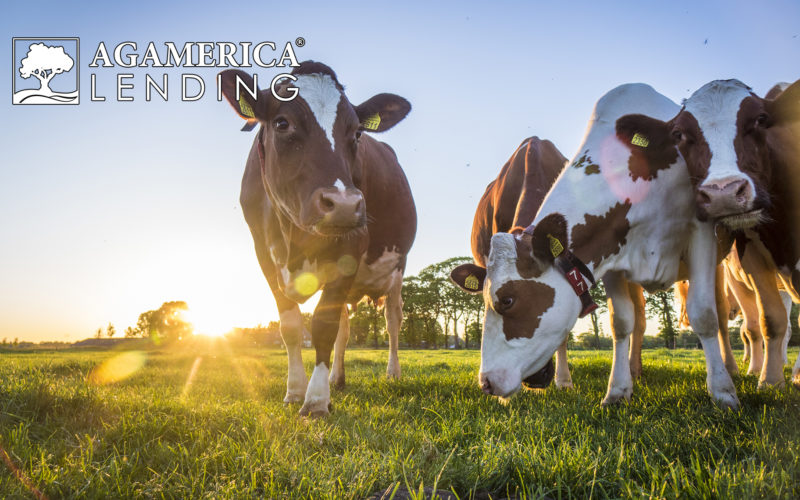 Ways Ranchers Can Overcome the Challenges Faced During Covid-19
