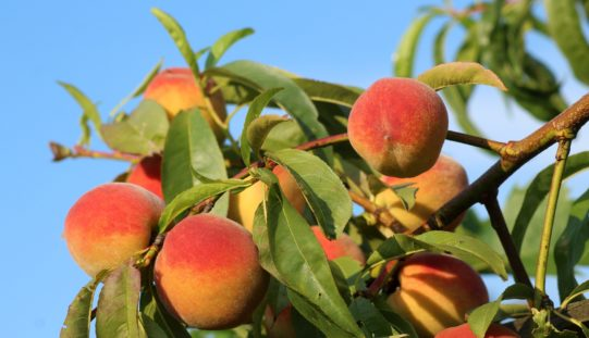 Signs of the Season – sponsored by Farm Credit of Central Florida