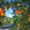 Signs of the Season Sponsored by Farm Credit of Central Florida