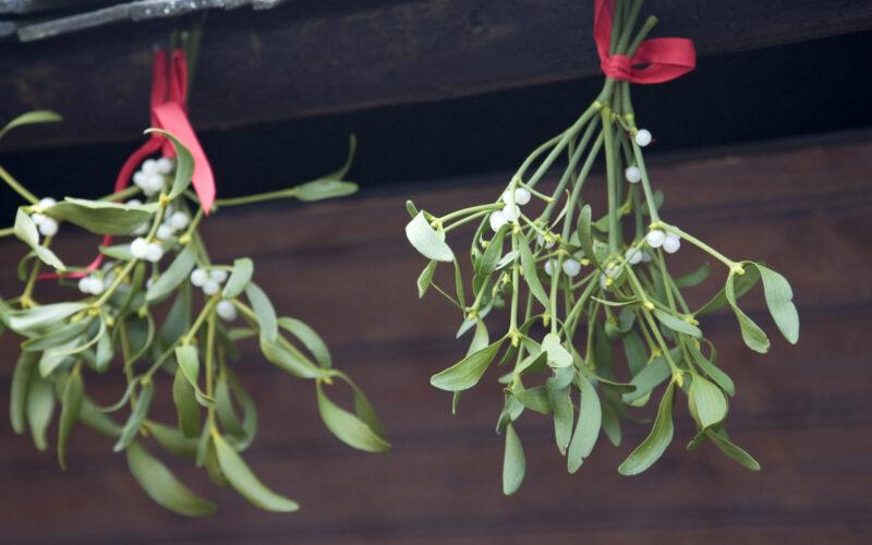 Mistletoe Musings