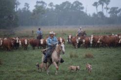 Five Ways To Improve Land Profitability