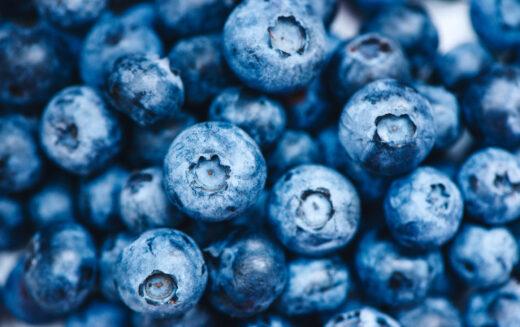Florida Blueberries Prized for Health Benefits, Freshness