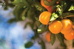 Five Factors Impacting Florida Citrus