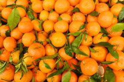 Annual Citrus Report
