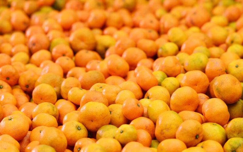 2021-2022 Citrus Forecast